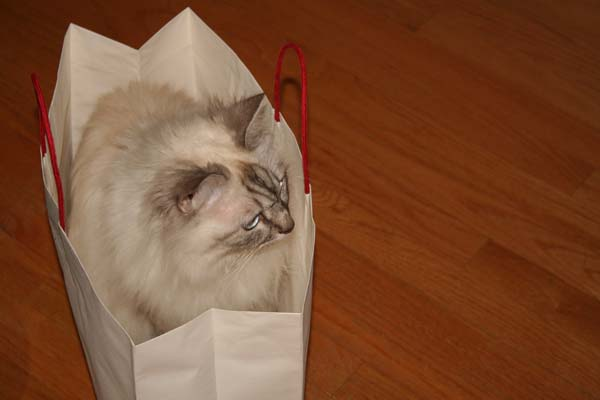 tessa in a bag