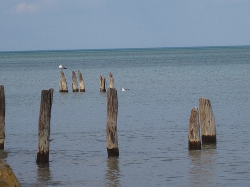 the gulls who guard the lake