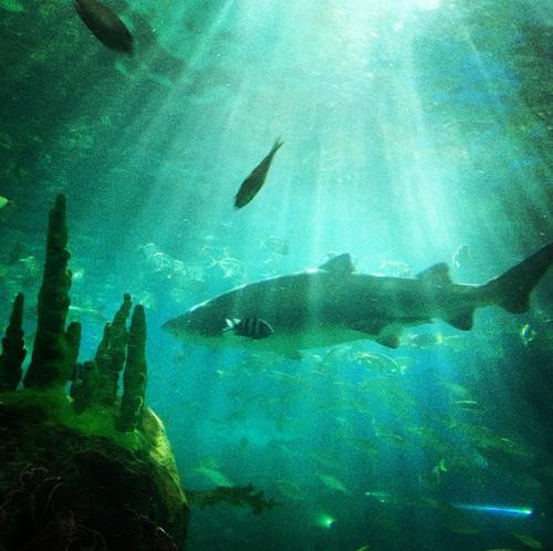 dramatically lit shark
